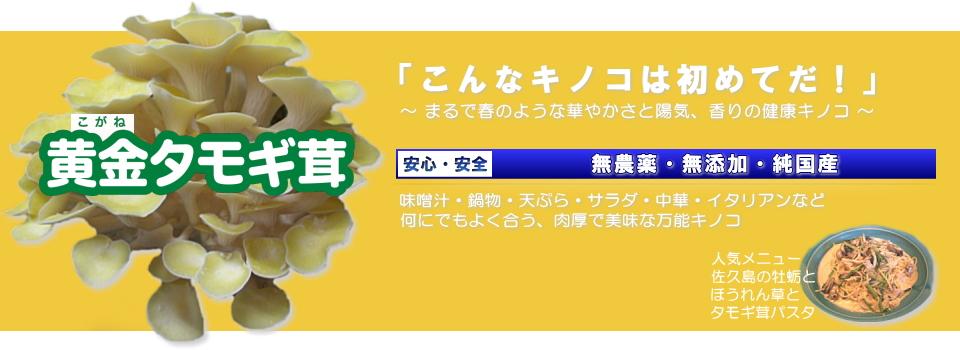 美味しい黄金タモギ茸を、安心・安全な無添加・無農薬栽培でご提供
