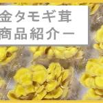 黄金タモギ茸について