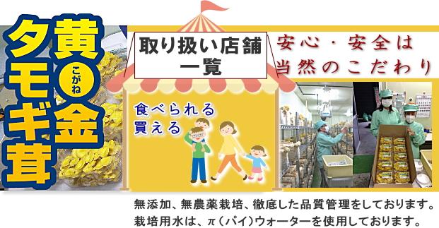 安心・安全は当然のこだわり。黄金タモギ茸の生産と卸販売の信長きのこ園